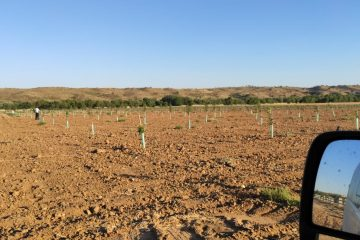 Plantaciones de pistacho